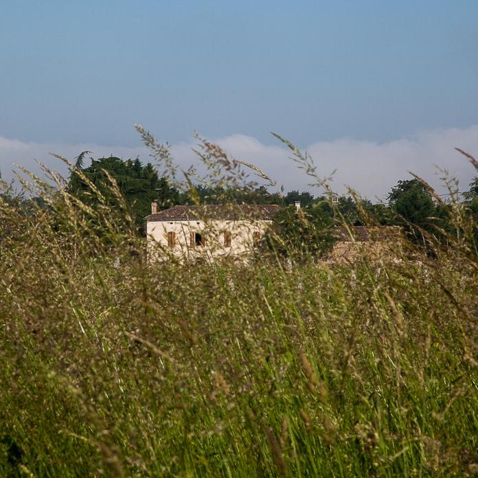 Maison entre les vignes